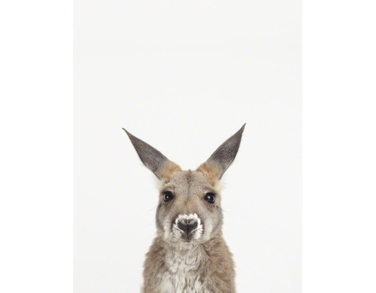 Baby Kangaroo Little Darling