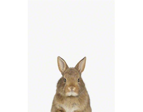 3946ccd4e711 baby bunny little darling by Sharon Montrose