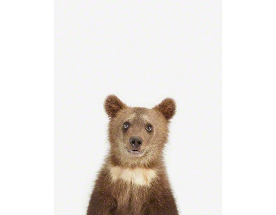 Picture baby bear