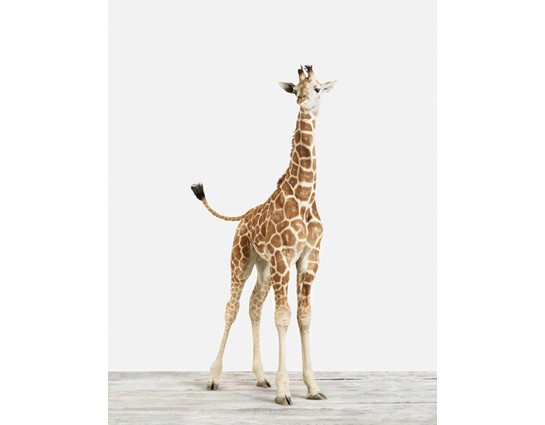 Baby Giraffe No.4 vertical
