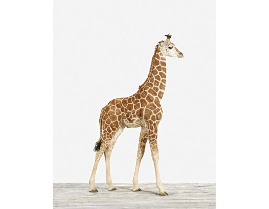 Baby Giraffe No.1 vertical