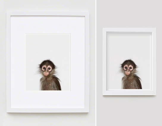 Baby Monkey Beautiful Pictures For Nursery Rooms Leoz Com En